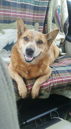 Patsy Girl going on a little road trip with us today! Such a beautiful smile :-)