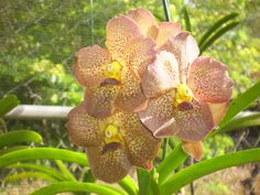 Orchid World Barbados... over 30000 flora and fauna await here!