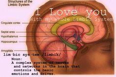 Limbic System- amygdala, hippocampus, cingulate cortex