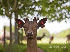 Little Deer by Alex Art Deer, Moose Art, Greeting Cards, Wall Art, Gallery, Cute, Animals, Animales, Roof Rack