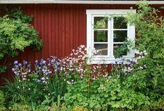 My Rose Valley: A dream of a flower garden Red Cottage, Garden Cottage, Home And Garden, Scandinavian Garden, Norwegian House, Sweden House, Red Houses, Charming House, Green Gables