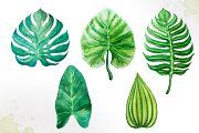 Tropical leaves. Watercolor vector. - Illustrations - 4