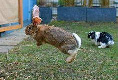 Binky bunny