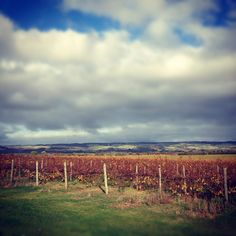 love the changing colours of the vines South Australia, Wineries, Vines, Colours, Country, World, Places, Travel, The World