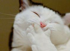5 Tips for Writing Humor: The Art of the Unexpected Laughing is healthy for you. If writing humor. Cat And Dog Videos, Funny Cat Videos, Funny Cat Pictures, Funny Cats In Water, Funny Cats And Dogs, Taehyung, Word Cat, Image Originale, Funny Dog Memes