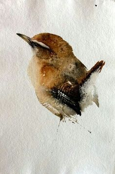 Carolina Wren watercolor