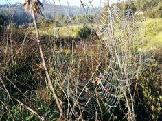 Spider net...