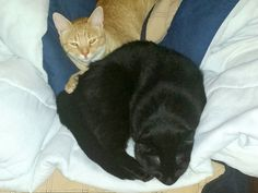 Vicki sent this great photo of Midnight, a cat she fostered, along with his pal Pumpkin.  Love!   =^..^=  During October, Cat Faeries honors black cats. We'll  post pictures of our customer's black beauties here, on Facebook and in our newsletter.  We are donating 1% of our October sales to several black cat rescue groups. Learn more at www.catfaeries.com/blog/celebrating-black-cats-in-october/