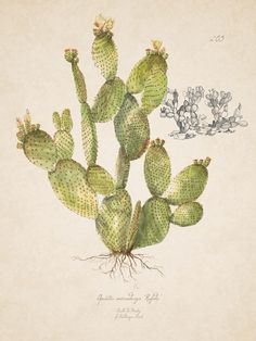 Cactus Plants, Happy, Drawings, Cacti, Ser Feliz, Happiness, Being Happy