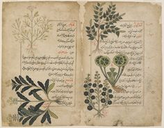 South Asian and Himalayan Art | Double folio from a Kitab-i hasha'ish (The book of herbs) | F1998.82