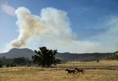 Horses cross a pasture as the Butts fire burns above Snell Valley, California July 3, 2014. The fire has scorched more than 4,300 acres since it started. REUTERS/Noah Berger
