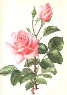 dipingere fiori ad acquarello+modelli+esempi+da copiare - Cerca con Google