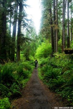Come on !  Let's go for a walk !....  ( Olympic National Park, WA)