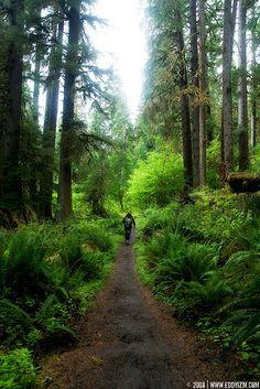 Green.... ( Olympic National Park, WA)