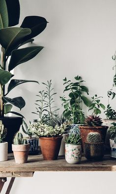 Plants bring a positive and creative energy to our every day.