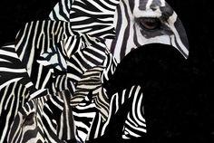 Zebra collage.