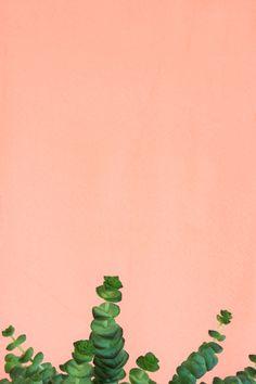 Urban Jungle Bloggers: #plantcolorpop by @heimatbaumcom