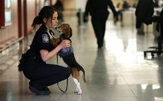 Beagle :)