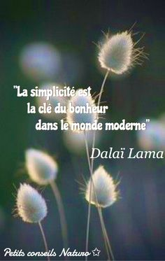 Simplicity is the key to happiness in the modern world.