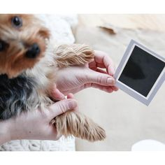 Capture those once in a lifetime moments of your fur baby's prints forever, with this Paw Print Stamp Pad. It's easy, clean and mess-free! Dog Passed Away, Pet Paws, Stamp Pad, Cute Panda, Baby Prints, Dog Care, Fur Babies, Your Pet, Pets