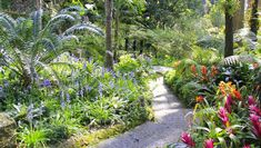 """""""LA MORTELLA GARDENS""""  *** La Mortella occupies an area of about 2 hectares and it's home for over 3000 species of plants, among which there are streams, ponds and fountains that allow the cultivation of aquatic species…"""