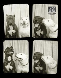 Dogs in Photo Booths | POPSUGAR Tech
