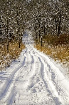 Into the wintry woods (Yankee Springs Recreation Area, Michigan) by Tim Kornoelje cr.