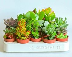 Live Mixed Succulent Plants Indoor Open Terrariums Wedding Favours Baby Shower in Pots Succulent Favors, Succulent Pots, Planting Succulents, Planting Flowers, Concrete Planters, Ceramic Planters, Planter Pots, Terrarium Wedding Favor, Wedding Favours