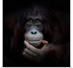 Global Gallery 'The Mirror Image' by Antje Wenner-Braun Framed Photographic Print - Spiegel Wall Art Prints, Framed Prints, Canvas Prints, Canvas Size, Canvas Art, Big Canvas, Mirror Canvas, Toile Photo, Amazing Animals