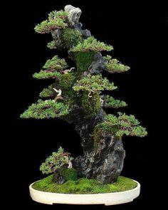 Prenez soin de votre bonsaï comme un pro ! @plants1990 #plante #bonsai #jardin #taille #ficus Bonsai Tree Types, Bonsai Plants, Bonsai Garden, Bonsai Trees, Growing Moss, Growing Tree, Ficus, Permaculture, Hobbit Garden