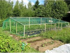 deer and bird proof fencing with house frame and netting by roslyn