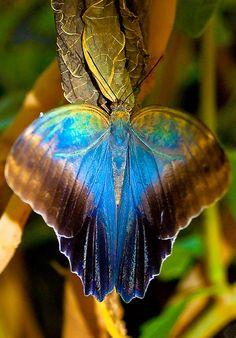 """Butterfly with Gorgeous Colors / """"Cuidado com os sentimentos, se bons ou ruins eles quando chegam fazem grandes transformações."""" (Nilton Mendonça)"""