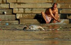 Ganges River Pollution - body floats past bather in Ganges River at Varanasi - a common occurrence along with billions of liters of sewage pumped into the Ganges daily as well as bodies of unwanted babies and dead cattle thrown in. Funeral pyres often are made without enough wood to completely burn the body so the partially burnt body becomes pollution. Along with bacteria there is super-drug-resistant bacteria in the Ganges that can make bathers terminally ill.