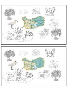 Lumea lui Scolarel...: Medii de viață și relații de hrănire: DELTA