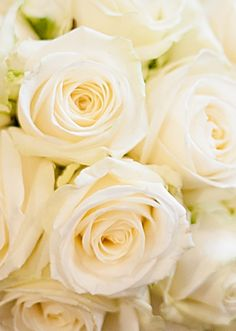 Cream Avalanche Roses - my wedding bouquet photo by Dominic Wright photography