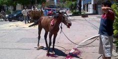 Please sign and share this petition against the exploitation of horses in Mexico. Al gobernador del Estado de México, Eruviel Ávila : La eliminación de la traccion a sangre de los equinos del Estado de México