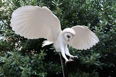 Paper+and+wood+Barn+owl+sculpture+—+Paper