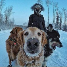 @Regrann from @besomedoggy - Before The Thaw dog walking when you live less than 200 miles from the Arctic Circle. . : @timthetoothninja with @GoPro #dogs #puppies #puppy #dogstagram #klout @capochino76 http://ift.tt/2pNodO0 #dogs #dogsofinstagram #pup #puppies #puppy #doggie #dogsareawesome #instadog #instapic #picofttheday #pets #puppydogeyes #klout @cindycapo