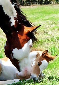 A mother horse snuggling her baby.