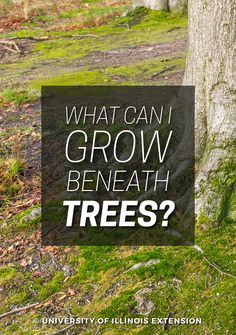 Will grass not grow around the base of your trees? This blog post talks about different options, from mulch to groundcovers.