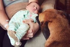 5 Tips on introducing your first baby (your dog :) to your new baby.