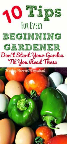 Are you starting your first garden? Are you a gardening beginner? If you are starting a garden for the first time, or even a 2nd, or 3rd....Here are 10 Things You Need to KNOW before you start your garden. Find out how to get started gardening, with climate tips, seeds vs. seedlings, preparing your soil, and lots more!