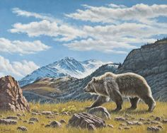 Walking The Ridge  (grizzly) - Bear painting by Paul Krapf