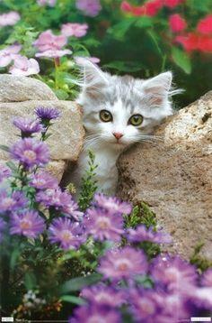kitty in the garden Flowers Garden Love