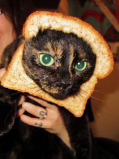 In bread cat - Looks like my Haleakala.