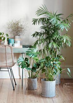 Kwiaty w domu-prosty sposób na odmianę wnętrza, fot.mat.pras. Hubsch