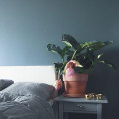 Rosenskärm i vårt sovrum