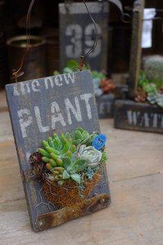 Succulent Display, Succulent Gifts, Succulent Gardening, Succulent Arrangements, Container Gardening, Succulents In Containers, Cacti And Succulents, Planting Succulents, Garden Crafts