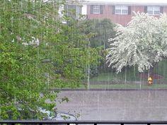 Heavy downpour Rain, Random, Plants, Rain Fall, Flora, Plant, Waterfall, Rain Photography, Planting