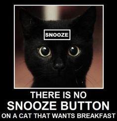 O meu despertador